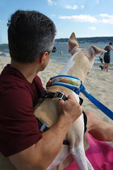 The Beach (DiamondBonz) Tags: summer dog pet bay whippet papa sandyhook spanky
