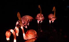 _DSC9615_2 (Elii D.) Tags: light fish flower animal night zoo monkey neon dragons lantern lampion dargon