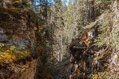 MH5_9265 (memories by Mark) Tags: rockies alberta banff rockymountains banffnationalpark johnstoncanyon