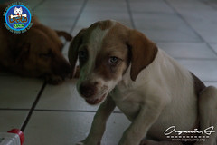DSC08176 (OrgNicAmb) Tags: dogs perros nicaragua refugio mascotas masaya peluditos recataditos casahogarlucito orgnicamb