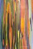 Rainbow tree 3 (PIERRE LECLERC PHOTO) Tags: life trees tree nature colors forest wow happy hawaii amazing rainbow colorful natural awesome joy happiness bark kauai eucalyptus magical rainbowtree pierreleclercphotography