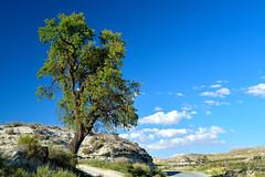 El rbol de Ttugi (chemakayser) Tags: blue espaa tree verde skye green azul hojas spain andalucia cielo granada galera
