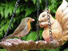 would you like to share (nannyjean35) Tags: trees robin chains squirrel feeder pellet