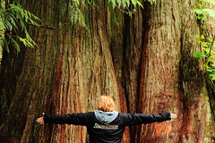 The Big One (Steve Boer) Tags: tree forest big ancient bc britishcolumbia cedar massive huge ancientforest