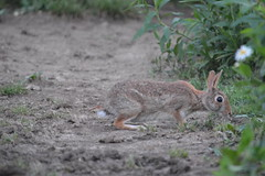 DSC_0152 (Kayleigh Roberts) Tags: flowers wild summer horse macro rabbit bunny chickens field night barn cat dark evening mud dusk turtle shell daisy stable