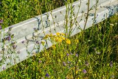 blhende Leitplanke (JBsLightAndShadow) Tags: flowers summer flower field sunshine nikon blossom sommer feld felder sunny blumen bloom fields barrier heidelberg blume blte sonnig sonnenschein blhen leitplanke nikond3300 d3300