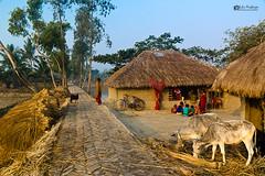 IMG_1044 sig (Subir Mukherjee Photography) Tags: sunderbanindiandelta mangroveforest royalbengaltiger rain forest