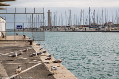 160403_lan_her_set_2922.jpg (f.chabardes) Tags: france languedoc ste vieuxport hrault avril 2016 2t