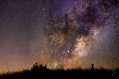 Stargazing with skippy. (dualiti.net) Tags: wallpaper sky nature beautiful night canon way stars outside photography natural background country australia explore astrophotography kangaroo download skippy milky stargazing 6d