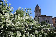 Alhambra (HDH.Lucas) Tags: flower spain lucas espana alhambra andalusia  granade