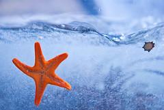 wave (stacey catherine) Tags: orange aquarium starfish ngc wave bubbles capetown twooceansaquarium