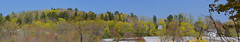 DSC_0065 gh Stitch (johnjmurphyiii) Tags: spring connecticut greenhouse cromwell originaljpeg johnjmurphyiii