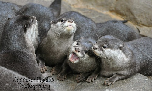 It Otter Be a Great Week!!!!