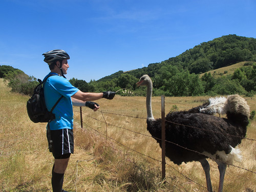Ostrich farm on Bollinger Canyon Road