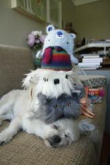277/365 Hat Stack w/ Vincent Hat, Guy Hat, Rainydaystranger Hat & Kir Hat (Tiny Haus) Tags: dog guy hat mutt blythe kir tinyhaus rainydaystranger
