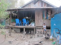 Sebastian scaring ducks (offthebeatenboulevard) Tags: thailand orphanage volunteering maesot burmeseborder