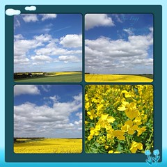 in fields spread with sun shine (green-dinosaur) Tags: flowers light sky sunlight collage landscape countryside kent colours mosaic country sixwordstory theme environment 365 sunlit app iphone iphone4 iphoneography lifeinlofi theinspirationgroup suefagg wearejuxt theappwhisperer backspacesapp