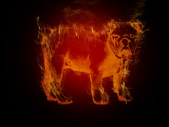 burning brute 2 (sonya77pro) Tags: photoshop puppy movie fire graphicdesign blood funny kill adobephotoshop arm bull bulldog crack filter adobe ugly gradient horror terror mean englishbulldog bloody