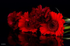 I'll Go For Red! (BGDL) Tags: flowers red reflections gerbera tabletop carnations nikond7000 ourdailychallenge bgdl beginswithr nikkor50mm118g elementsorganizer11