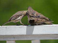 huddle. (infiniteciel) Tags: baby house cute male bird birds female babies finch immature
