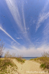 The Beach ... and the price of admission (Ken Scott) Tags: usa beach spring michigan bluesky bugs lakemichigan greatlakes april freshwater voted northmanitouisland leelanau goodharborbay 45thparallel 2013 fhdr streakyclouds sbdnl sleepingbeardunenationallakeshore mostbeautifulplaceinamerica