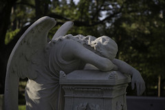Angel of Grief - Hill Family (Mike Schaffner) Tags: monument cemetery grave graveyard statue angel texas tx hill houston glenwood sorrow weeping grief grieving angelofgrief