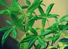 Life (MahanMD) Tags: life plants green leaves rain leaf drops rainyday malaysia kualalumpur waterdrops lastleaf باران سبز گیاه زندگی gogreen سبزی سبزه مالزی قطره canon400d کوالالامپور