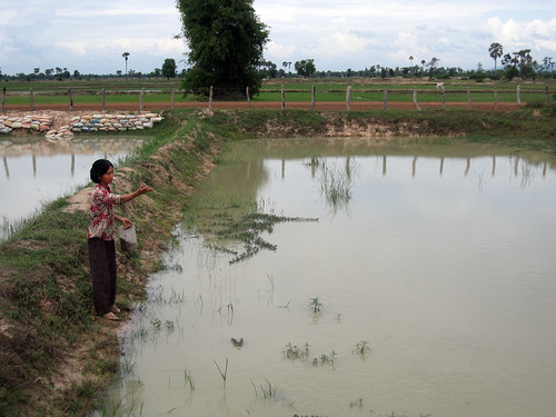 A women feeding fish with pelleted feed in Cambodia. Photo by Jharendu Pant, 2009.