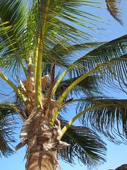(goatling) Tags: home island seaside tropical tropic caribbean cayman carib caymanislands tropics grandcayman caribe westbay westindies britishwestindies northwestpoint paradisepointe 201305gcm