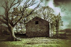 Old barn between Whitewell and Chipping (Normanbongo) Tags: trees tree barn lancashire chipping bowland northernlight troughofbowland ribblevalley uploaded:by=flickrmobile flickriosapp:filter=nofilter