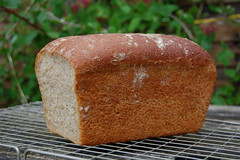 Sourdough Bread (Johnny Frisco) Tags: crust bread dough wholemeal loaf nikkor flour yeast sour sourdough crumb gwr nikkor1855mm nikond40