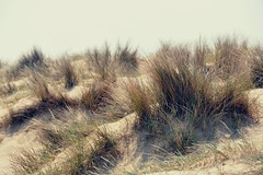 Dunes (davespilbrow) Tags: ocean sea sun sunlight seascape beach nature water grass sunshine landscape coast suffolk sand scenery paradise surf natural outdoor background dunes scenic shore remote grasses idyllic southwold seacoast
