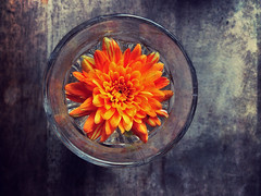 Purple table (Nada*) Tags: wood food orange flower colour art water glass swimming table petals cafe dof purple bright rustic decoration vivid decor hue 4s iphone notexture iphonegraphy instagram iphone4s