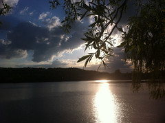 Sun Setting over Westport lake (Matt Burke) Tags: sunset sun lake reflection tree water 2012 iphone westportlake wetport