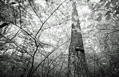 in the woods (Hiroyuki Okamoto) Tags: leica blackandwhite monochrome ma kodak voigtlander hc110 rangefinder 400 brook 135 m2 acton selfdeveloped superwideheliar homedeveloped nashoba kentmere selfdeveloping voigtlandersuperwideheliar15mmf45ii