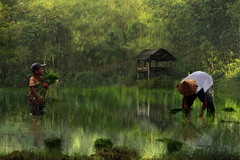 Father and Son (iDruz A) Tags: light portrait people man reflection tree green texture nature boys water digital canon painting children landscape photography j photo bokeh magic fineart ricefield photoart photowall artphoto rurallife magicalart canvasphoto