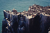 Seabirds (MMortAH) Tags: 50mm nikon wildlife 14 explore northumberland nikkor puffins nationaltrust farneislands afs seabirds guillemot kittiwake arctictern d90 innerfarne