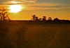 Kawartha Sunset (A Great Capture) Tags: orange sun ontario canada nature field set hub village dusk farm country cottage down 日落 on the bobcaygeon kawarthas غروب kawarthalakes ald آفتاب kawartha torontophotographer cityofkawarthalakes ash2276 ashleyduffus सूर्यास्त wwwashleysphotoscom