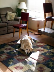 Smart Girl (Waddellz) Tags: dog sun penny sunbeam g11