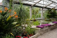 Linz Botanical Garden (GardenTraveller) Tags: pool garden linz botanical austria pond greenhouse garten botanischer strelizia