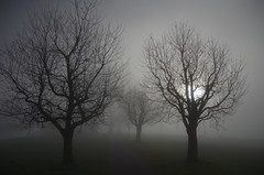Michaelskreuz (Aah-Yeah) Tags: mist tree misty fog schweiz nebel foggy root baum lichtblick bodennebel michaelskreuz