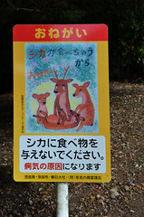 Crying Over Dead Deer (pokoroto) Tags: autumn sign japan dead october crying over deer  nara kansai 2014 10    naraprefecture  kannazuki   themonthwhentherearenogods 26