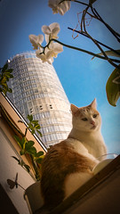 Best place (Thomas Kriehn Photography) Tags: sky flower building tower cat heaven blu himmel samsung galaxy benny katze 365 blau orchidee blume turm cato wolkenkratzer rwe project365 365days 365dayproject note3 365tage samsunggalaxynote3 3652015