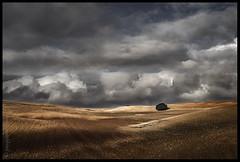 Campos (muliterno) Tags: campos losroyos