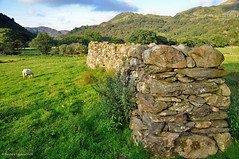 Nantgwynant (agabarka) Tags: mountain wall wales landscape sheep snowdonia gwynedd d90 nikon90