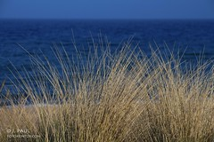 Niendorf/Ostsee (Elbmaedchen) Tags: sea strand meer baltic blau ostsee niendorf strandhafer