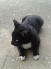 7 (1436) (CATS - DOGS) Tags: street cats animals cat kittens stray kedi sokak yavru kediler kedileri trkyetur