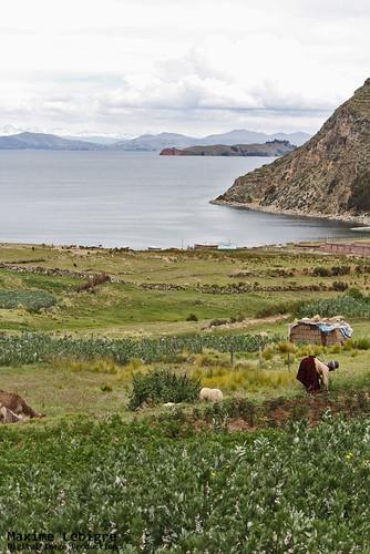 Idilic Gleaning - Bolivia