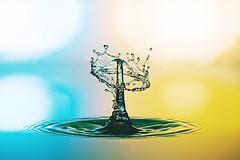 Wassertropfen_MG_7061 2 - water drop (horn.mats) Tags: macro water canon eos austria is sterreich drops waterdrop 100mm 7d l usm catcher makro iv f28 steiermark highspeed wassertropfen styria rottenmann usm canoneos7d yongnuo waterdropphotography highspeedfoto climpse iv highspeedfotografie yn560 highspeedfotography climpsecatcher tropfenfotographie hochgeschwindigkeistsfoto canon100mmf28mmlisusm yongnuo