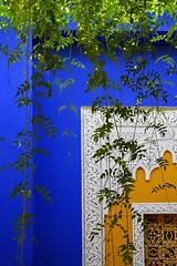 Marrakech, Morocco, 2008 (Photox0906) Tags: africa blue light white house plant detail green colors leaves yellow contrast jaune garden outside natural lumire couleurs jardin vert bleu morocco maroc villa contraste mineral marrakech majorelle northern blanc nord feuilles vegetal afrique dtail yvessaintlaurent naturel marocaine minral pierreberg